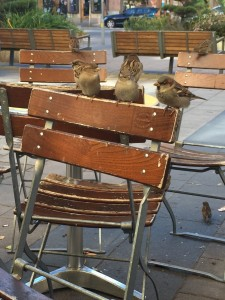 birdses